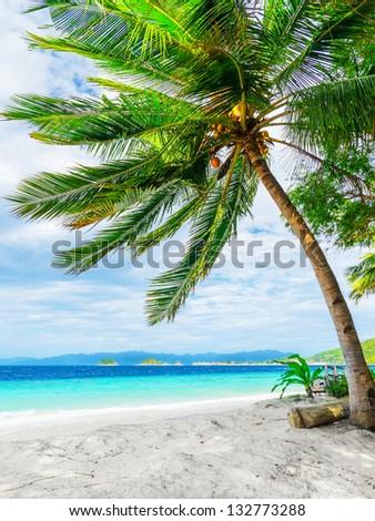 Green tree on  white sand beach. Malcapuya island, Palawan, Philippines. - stock photo