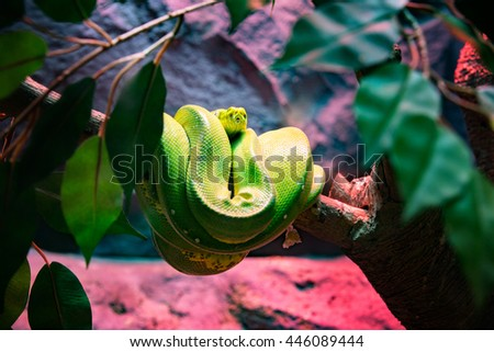 Green tree python on the branch. - stock photo