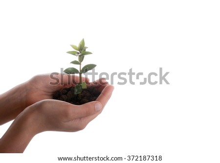Green tree seedling in handful soil in hand on an white background