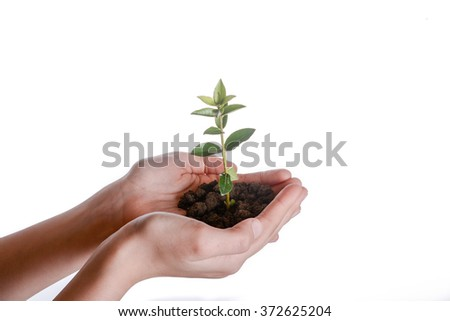 Green tree seedling in handful soil in hand on white background