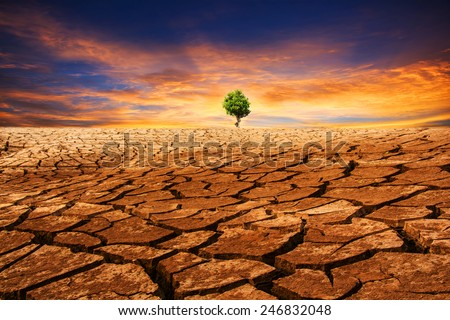 Green tree under dramatic evening sunset sky at drought cracked desert landscape