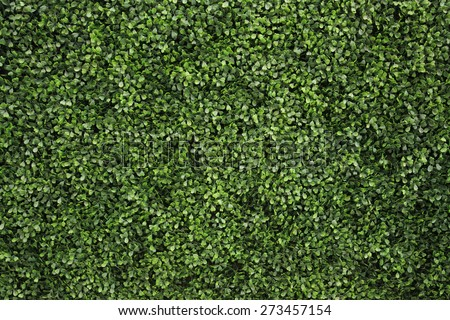 Green tree wall for closeup textured background pattern - stock photo