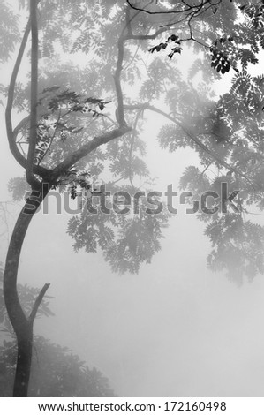 Green tree with fog at hot spring