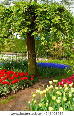 green tree with spring tree with  flowers lawn holland garden Keukenhof, Netherlands - stock photo