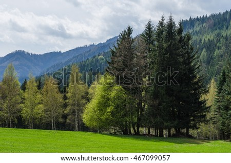 green trees and grass in the nature