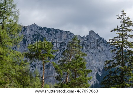green trees and high mountain
