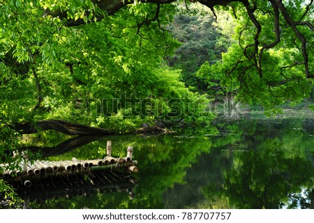 green trees and wooden deck over small lake