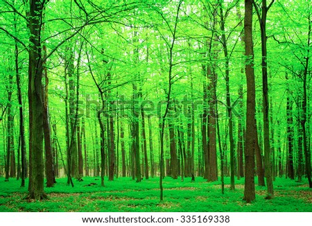 green trees background in forest - stock photo