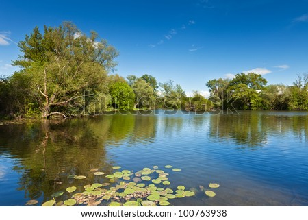 Green trees by the lake on a sunny day, with blue sky and water lilies in the foreground - stock photo