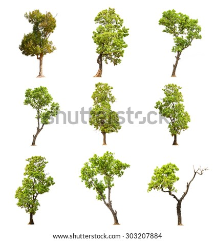 Green Trees Collection on white background - stock photo