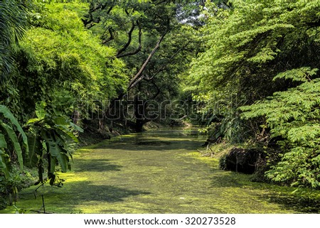 Green trees covered small canal filled with duckweeds in the public park.  - stock photo