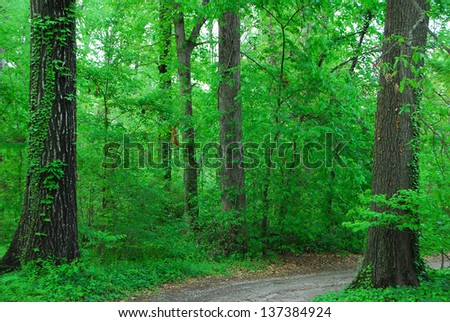 green trees growing in a dense forest jungle