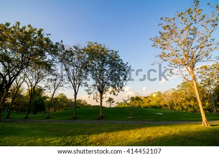 Green trees in beautiful park over blue sky in evening, Green garden