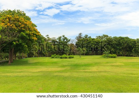 Green trees in beautiful park with blue sky - stock photo