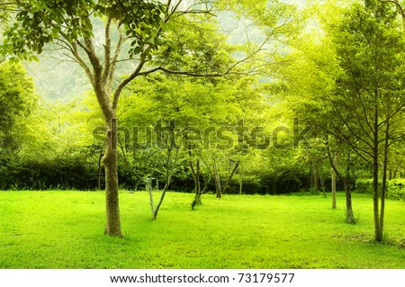 Green trees in park, a morning view. - stock photo