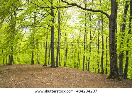 Green trees in spring forest, daylight