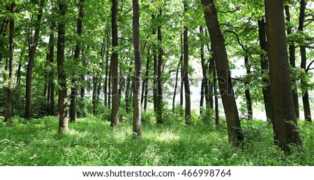Green trees in summer forest