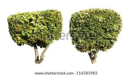 Green trees isolated on white. Decorative green tree