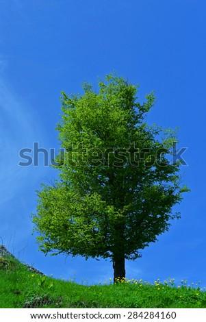 green trees, mountain landscape - stock photo