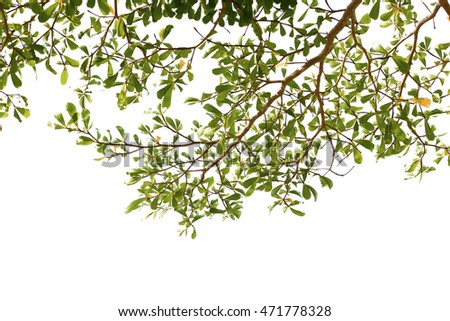 green treetop isolated on white