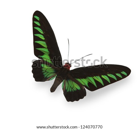 Green tropical butterfly with shadow - stock photo