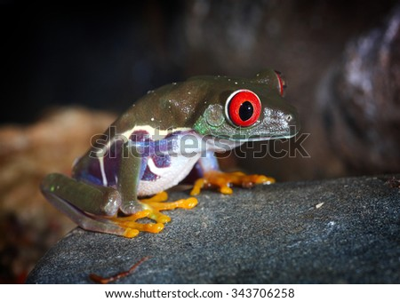 green tropical frog with big eyes sitting on a stone - stock photo