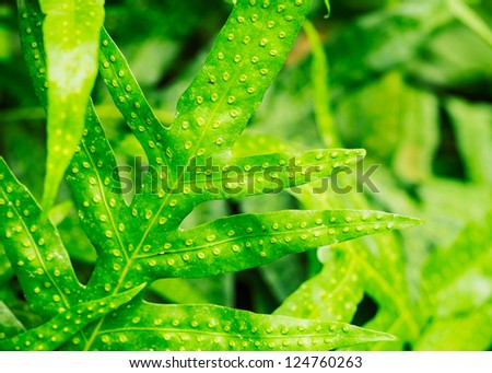 Green Tropical Leaf Background Abstract