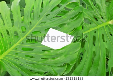 Green tropical leaves with blank card. Background