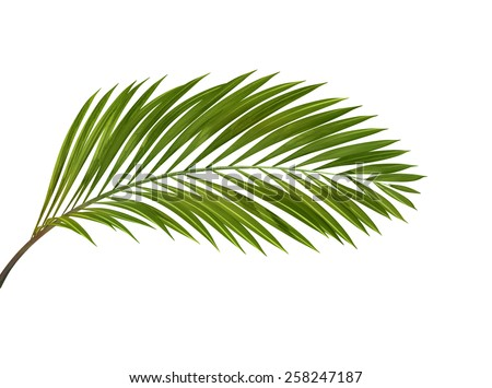 green tropical plant isolated on white background,