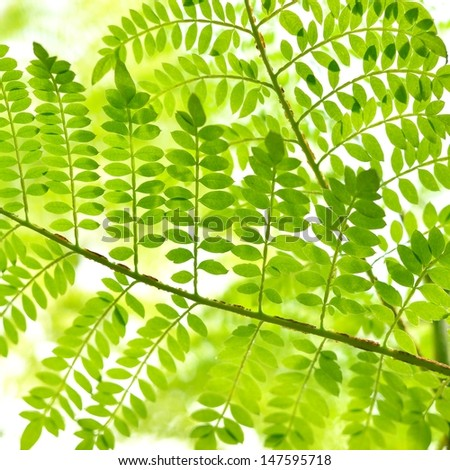 green tropical plants close-up - stock photo