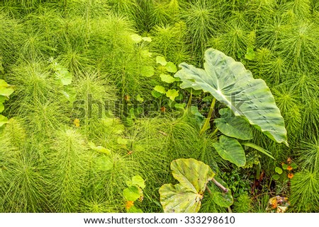 Green tropical plants on the island of Madeira, Portugal - stock photo