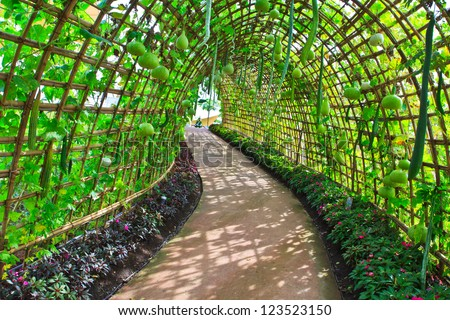 Green tunnel made from calabash plant - stock photo
