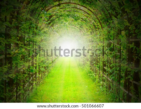 Green tunnel with sun rays in fresh spring foliage. Way to nature. Natural background from beautiful garden. Digital artwork with sunbeam effect for better feeling.