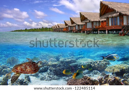 Green turtle in the tropical water of Maldives - stock photo