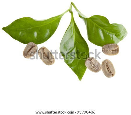 green unroasted coffee grains and leaves of coffee trees surface top view sign close up isolated on white - stock photo