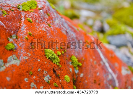 Green valley,red moss and stones in Franz Josef Glacier, New Zealand South Island - stock photo