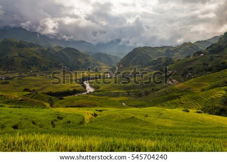 Green valley with a river and rice fields