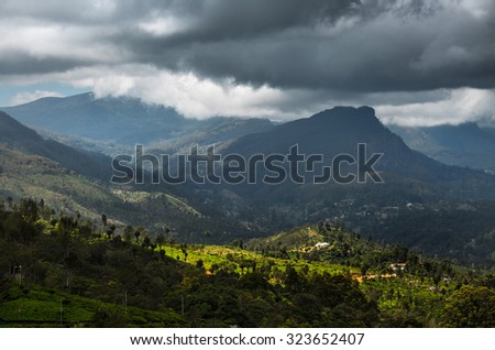 Green valley with tea plantations and mountains in the highland area near the village of Haputale, Sri Lanka