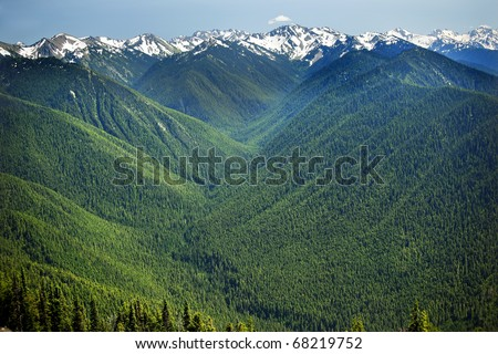 Green Valleys Evergreens, Snow Mountains Hurricane Ridge Olympic National Park Washington State Pacific Northwest  Ridge Line - stock photo