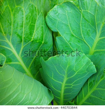 green vegetable leaves for clean food background