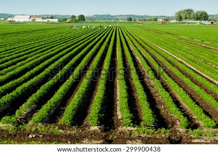 Green Vegetables Farm - stock photo