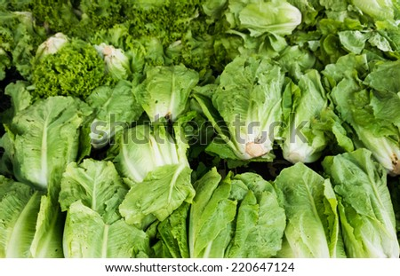 green vegetables in market. Green cabbage and lettuce - stock photo