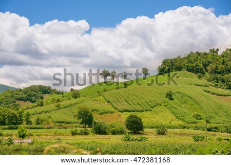 Green vegetation and landscape on the mountainside town of thailand