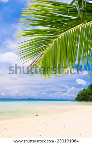 Green View Jungle and Sea  - stock photo