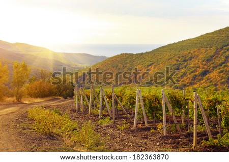 Green vineyards Mountain and sea at background