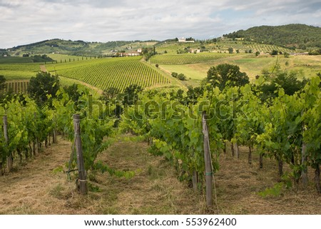 Green vineyards on the hills, Tuscany, Italy.