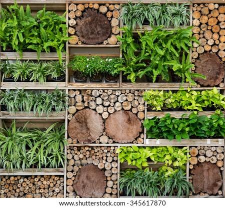 Green wall , Tree Wall - stock photo