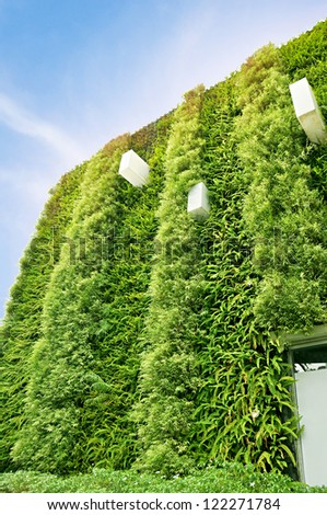 Green wall vertical garden - stock photo