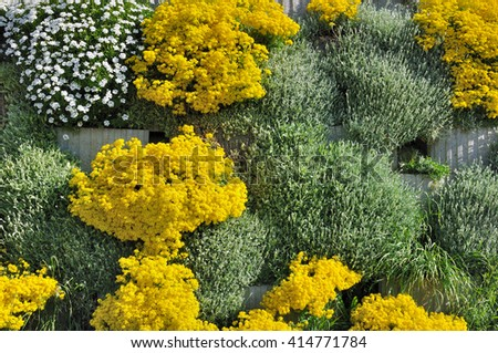 green wall with yellow flowers blooming - stock photo