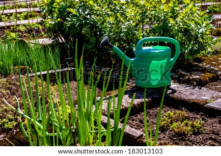 Green watering can, plants and vegetables in the garden.